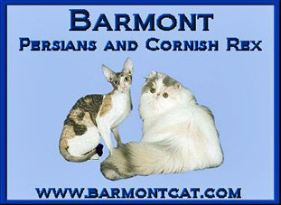 Barmont Persians and Cornish Rex